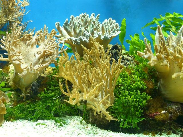 korál v moři